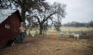 Owens cares for the livestock on her ranch.