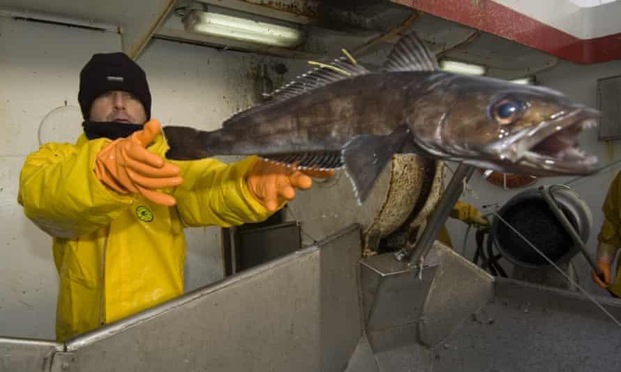 A Patagonian toothfish