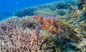 A timely look at the health of our oceans ... Blue Planet Live.