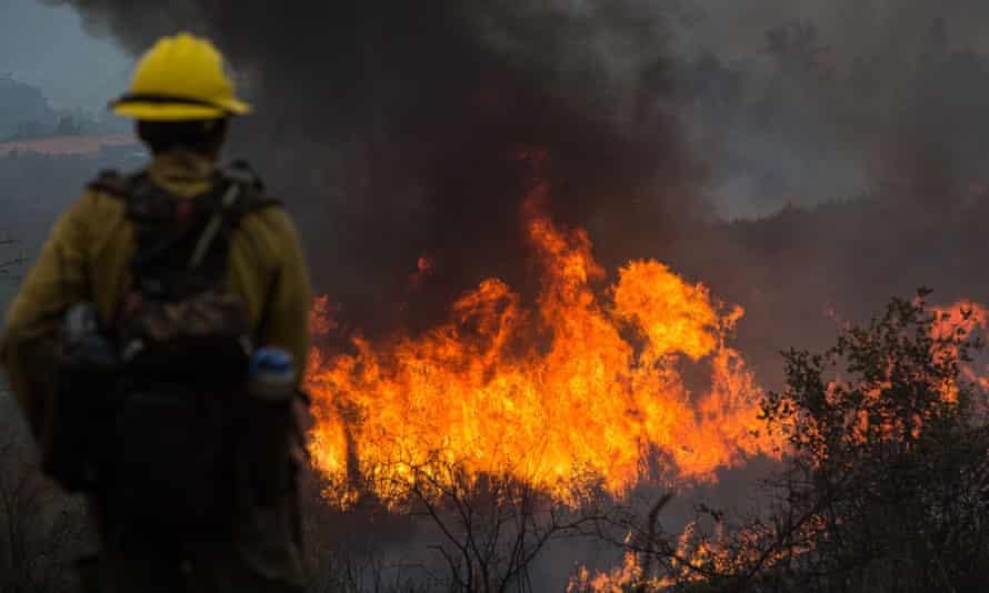A firefighter keeps watch as crews light backfires near Groveland, California.