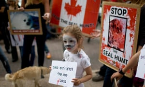 Environmental activists protest signs against Canada's seal hunt during in front of the Canadian embassy in Tel Aviv, Israel.