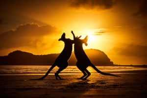 Dance at Dawn by Michael Eastwell, taken at Cape Hillsborough in Queensland. One of the winners of the Australian Geographic nature photographer of the year 2021