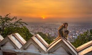Sunrise over the Swayambhunath temple, with monkey on ramparts.