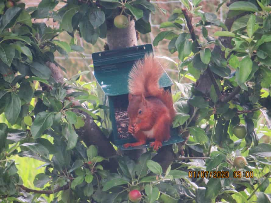 A squirrel feeds in Ian Wade's garden in Cumbria.