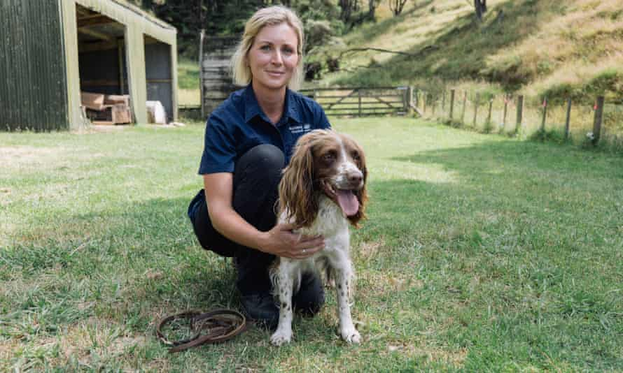Dog handler Kerryn Johnson with springer spaniel Pip, who is trained to sniff out kauri dieback