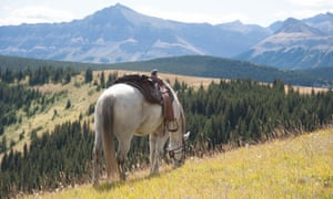 A saddle horse grazes in the Kananaskis region of Alberta, during a break in the trek. This pristine area, west of Calgary, located in the foothills of the Canadian Rockies, is best explored by horseback or on foot.