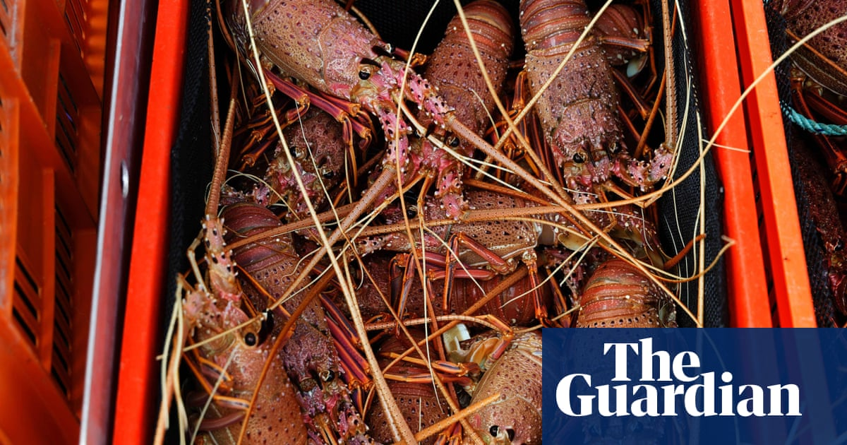 Smuggling Australian rock lobsters into China a national security threat, Hong Kong customs chief says