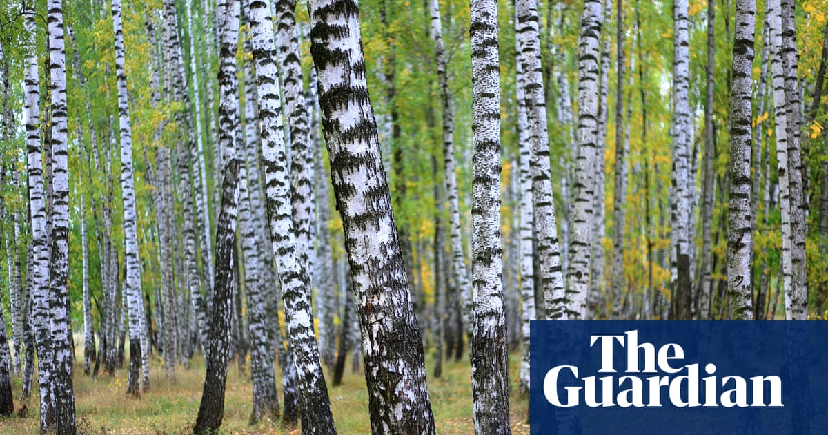 Parks and re-creations: the best books about Russian landscapes
