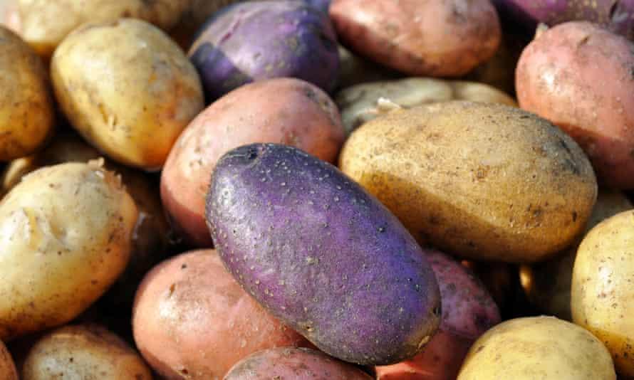 Harvest time: a selection of freshly dug potatoes.