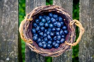 Blueberries for making Afinata.