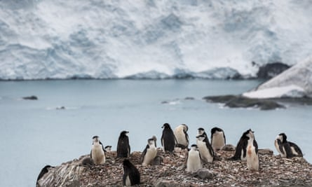 Chinstrap penguins in Antarctica, which at the weekend broke 20C for the first time in its history.