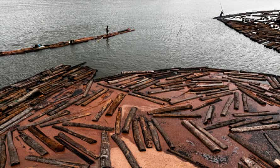 Colombian wood cutters float timbers from the Pacific rainforest in a sea bay close to Tumaco, Colombia.