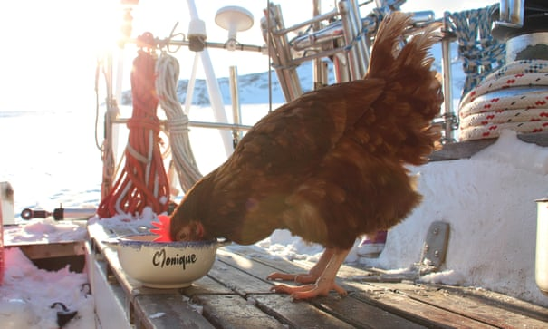 Have hen will travel: the man who sailed round the world