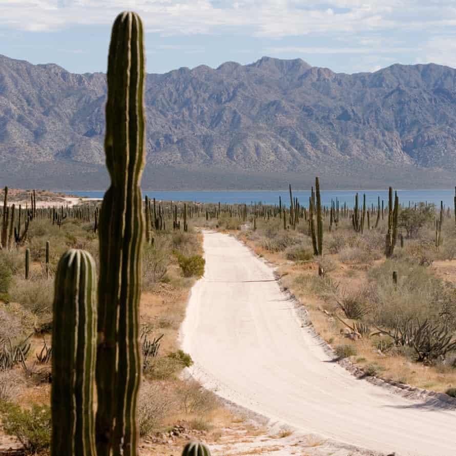 Road and saguaro cactus (Carnegiea gigantea) in desert landscape