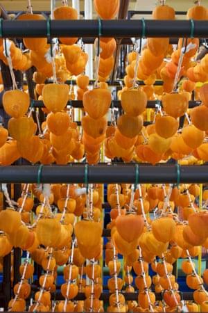 Persimmons drying at the Fukushima Mirai agricultural cooperative.