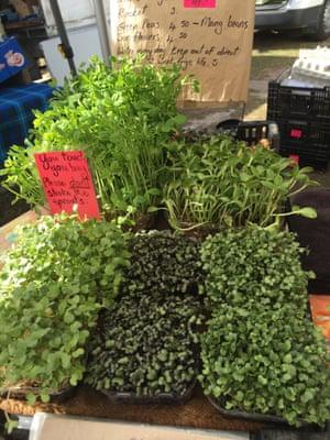 Fresh herbs for sale at Miami's organic farmers market.