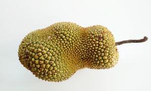the jackfruit, a tropical fruitPDGJGA the jackfruit, a tropical fruit