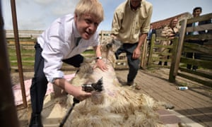 Boris Johnson shearing a sheep during a visit to Nosterfield farm near Ripon, Yorkshire, today.