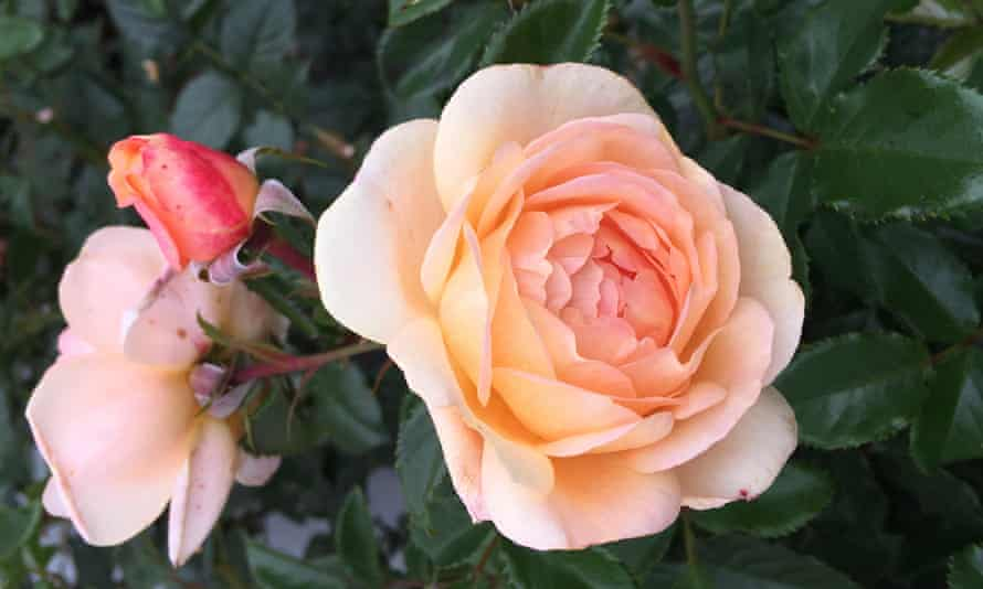 'If it must be roses, a plea for fairtrade if you can find them. She or he is worth it,' says Allan Jenkins