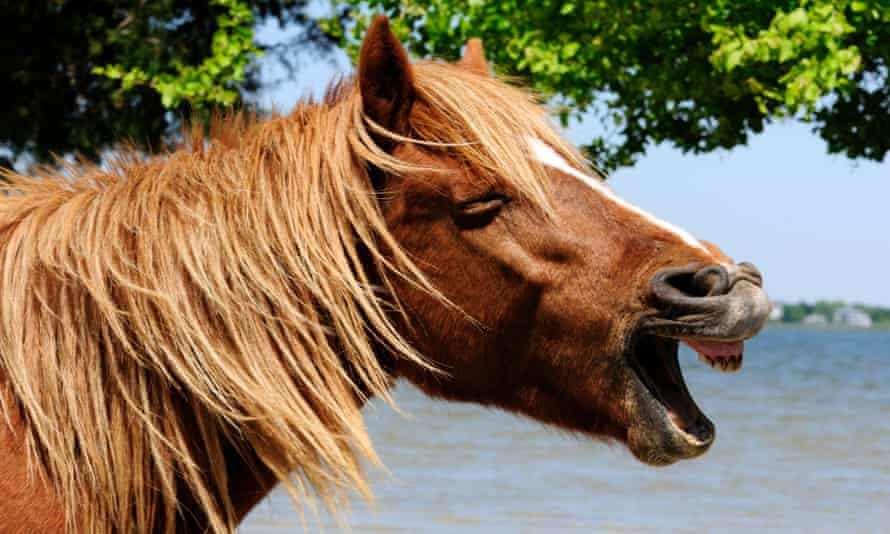 A pony neighing … maybe.
