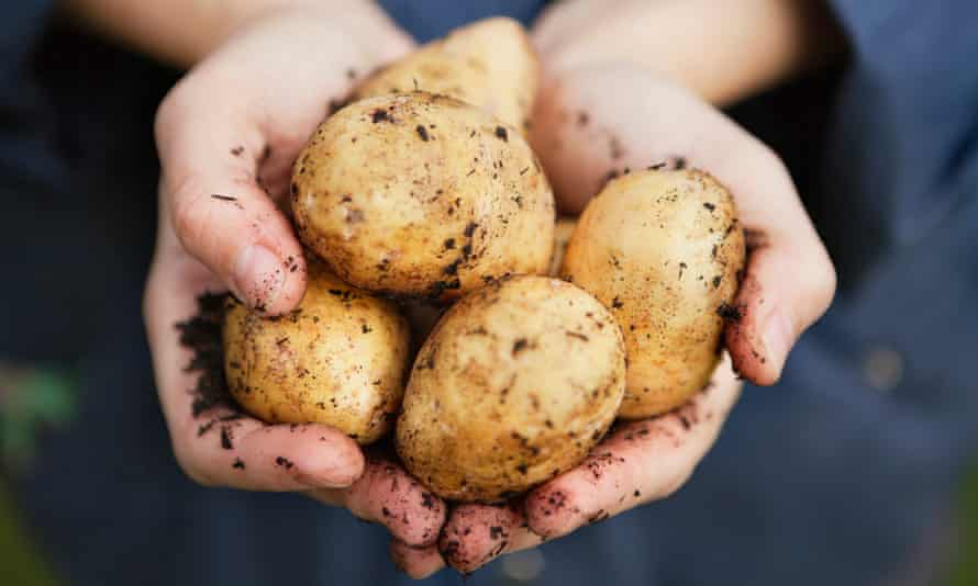 'Make it your goal to present a Christmas dinner featuring homegrown potatoes.'