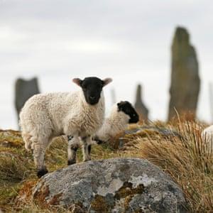 Lambs play near the Calanais standing stones.
