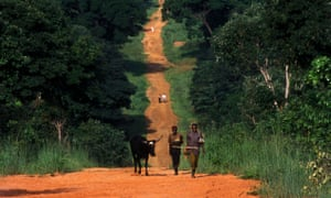 A dirt road with ox and cart in north-west Zambia