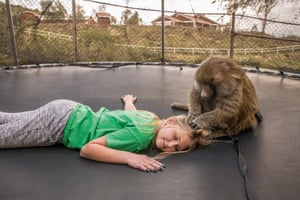 Jaden on trampoline with Chrissy, Animal Tracks, Agua Dulce, CA, 2019Sage focused on showing the bond between people and animals: Many of the people pictured here have dedicated most of their adult lives to saving animals. As for the animals, their sweetness, resilience, zest for life, and willingness to forgive people – to coexist with them and often to flourish – is remarkable, and may be their only salvation (S. Sohier)