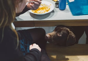 Adding anything that isn't complete and balanced, such as table scraps, can throw your pet's diet out of whack.