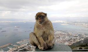 A Barbary Macaque monkey on the Rock of Gibraltar, 2007.