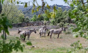 Wild horses in the Côa Valley.