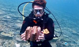 Investigador recolecta fichas de reclutamiento pobladas en el extremo sur de la Gran Barrera de Coral
