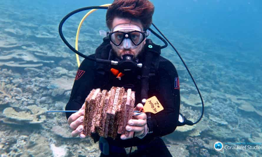 Researcher collecting populated recruitment tiles at southern end of Great Barrier Reef