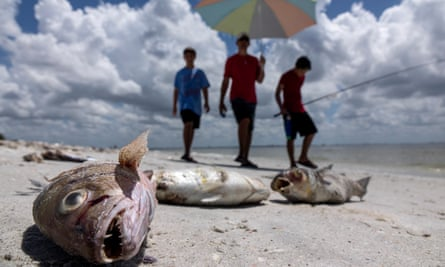 Fish washed up after dying in a red tide in Captiva, Florida.