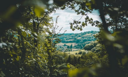 Woodland views from the Campwell site near Bath, UK.