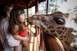 A young girl feeds a Rothschild giraffe with her mouth at the Giraffe Centre in Lang'ata, outside Nairobi, Kenya.