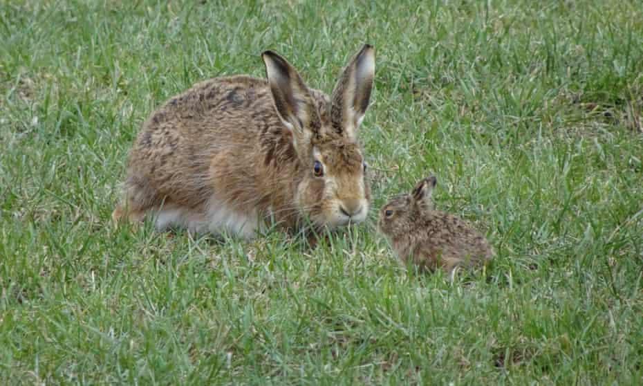 یک خرگوش Cumbrian و یک اهرم در 5 مارس.