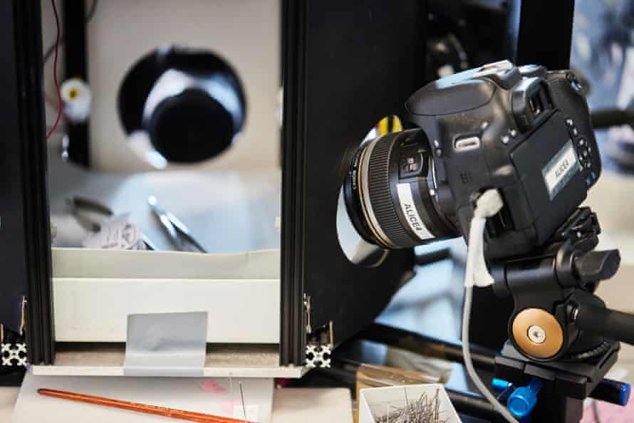 Digitising tiny wasp samples collected more than 100 years ago