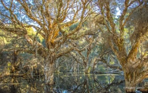 A forest reflected in a lake