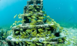 The artificial structures can be used to train new divers without damaging natural reefs as well as providing new areas of reef for marine life to colonise.