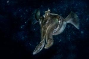 Winner, underwater world: Claudio Ceresi (Italy), Alien starship