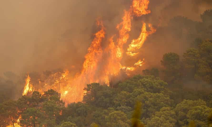 Trees ablaze