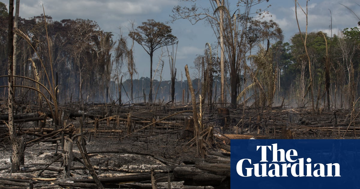 New \'disturbance map\' shows damaging effects of forest loss in ...