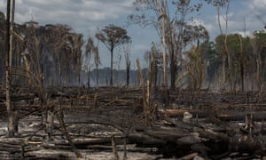 Recently burned forest in Pará state.