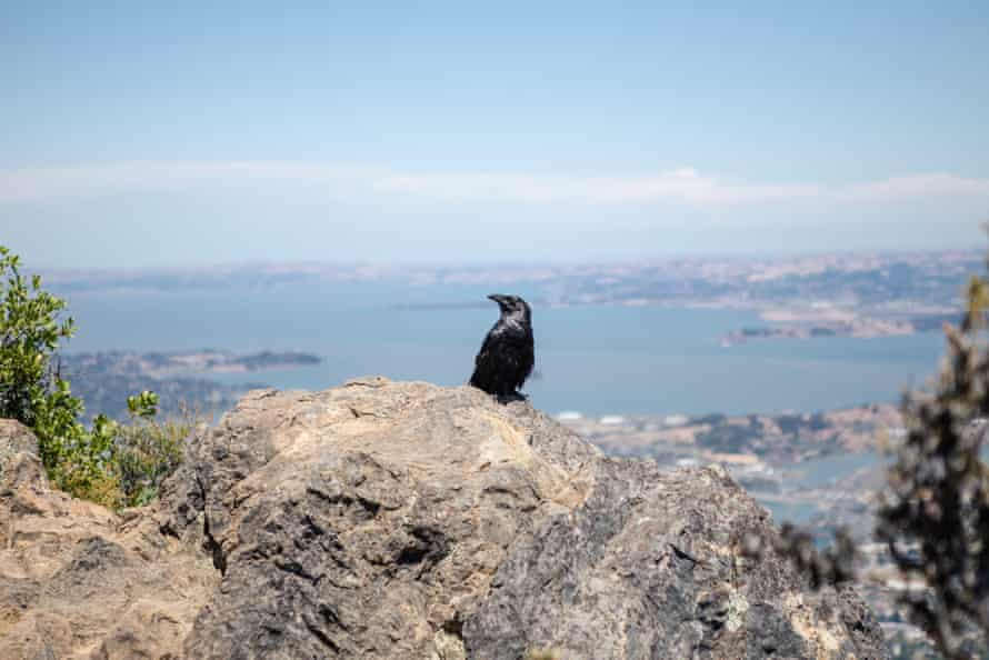 A bird perches on a rock in the mountains.
