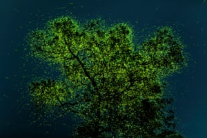 A green leafy tree illuminated by fireflies, on a dark night sky background