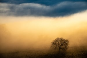 Tree in the mist at the Albtrauf