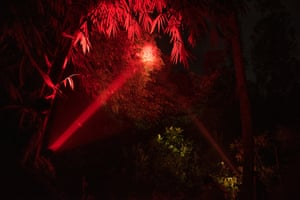 When tracking lorises, Nekaris and her team use a red-filtered torch to avoid disturbing the animals.