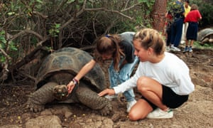 Opportunity of a lifetime … children get to stroke a giant tortoise in the Galapagos Islands.