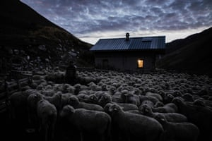 The flock are penned in for the night next to his hut